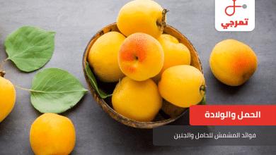 Photo of فوائد المشمش للحامل والجنين تعرفي عليها