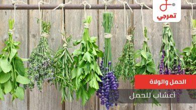 Photo of أعشاب الحمل تعرفي عليها لزيادة فرص الحمل