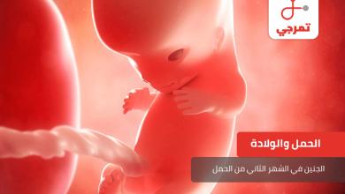 Photo of الجنين في الشهر الثاني من الحمل